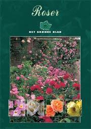beskæring af engelske roser